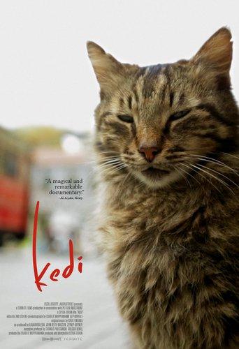 Affisch för Kedi