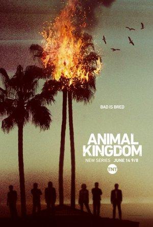Animal Kingdom: Säsong 1