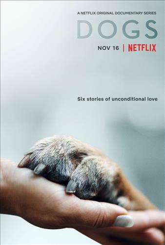 Affisch för Hundar